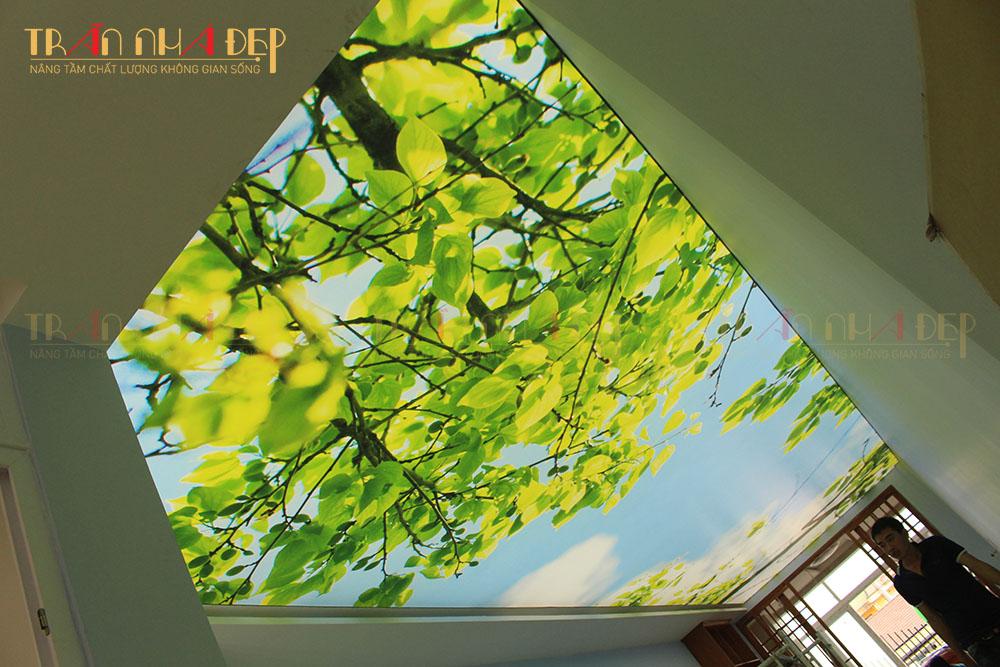 trần in cây xanh